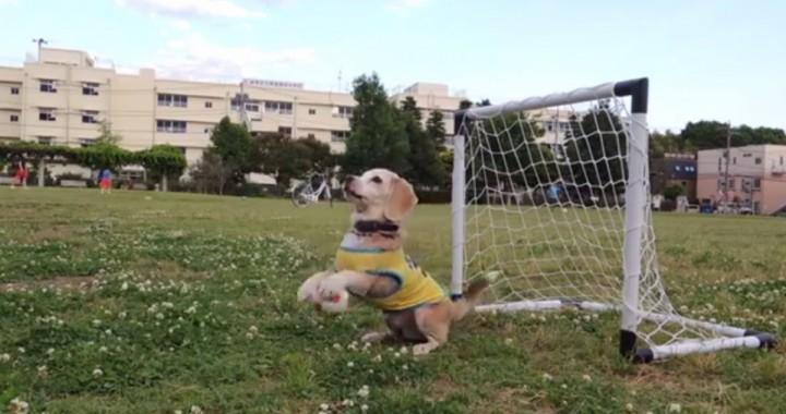 purin-super-beagle