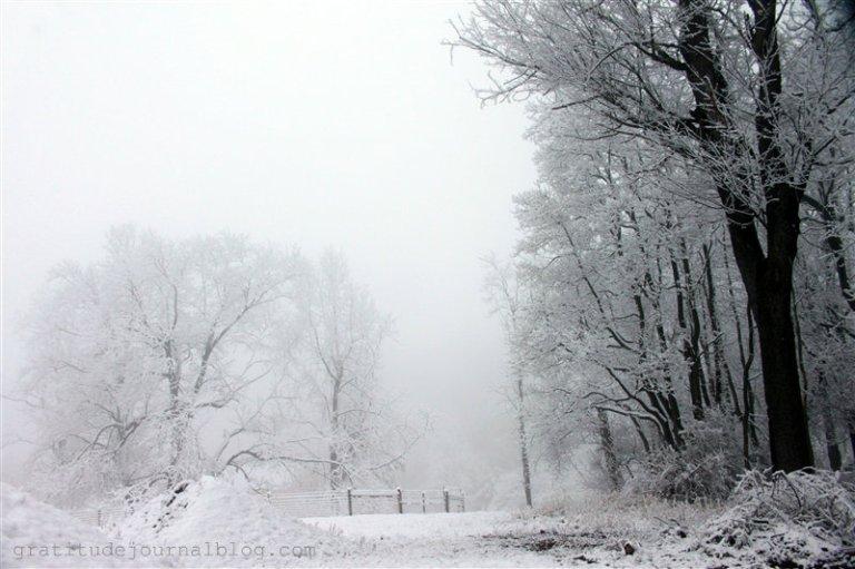 glorious-winter-14